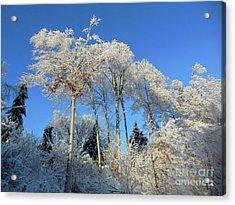 White Trees Clear Skies Acrylic Print
