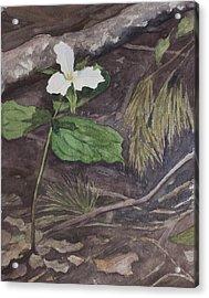 White Trillium  Acrylic Print by Debbie Homewood