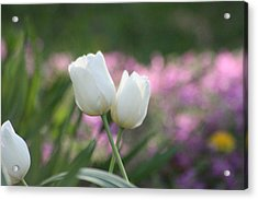 White Tulips Acrylic Print by Angie  Wise