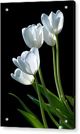 White Tulips Acrylic Print by Dung Ma
