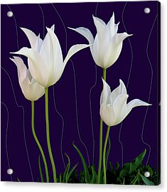 White Tulips For A New Age Acrylic Print