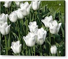 Acrylic Print featuring the photograph White Tulips by Manuela Constantin