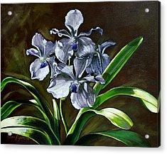 Morning Vanda Acrylic Print