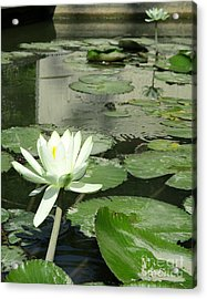 Acrylic Print featuring the photograph White Water Lily 3 by Randall Weidner