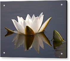 Acrylic Print featuring the photograph White Waterlily 2 by Jouko Lehto