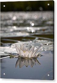 Acrylic Print featuring the photograph White Waterlily 3 by Jouko Lehto