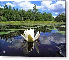 White Waterlily On A Lake Acrylic Print