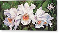 White Wedding Orchid Acrylic Print