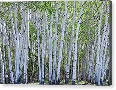 White Wilderness Acrylic Print by James BO Insogna