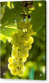 White Wine Grapes Lit By The Sun Acrylic Print by Teri Virbickis