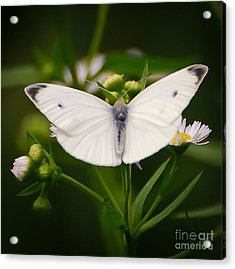 White Wings Of Wonder Acrylic Print