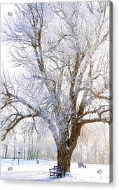 White Winter Tree Acrylic Print by Svetlana Sewell