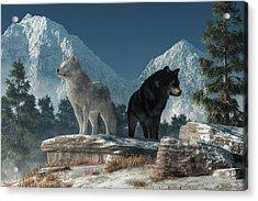 White Wolf, Black Wolf Acrylic Print by Daniel Eskridge