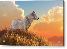 White Wolf Acrylic Print by Daniel Eskridge