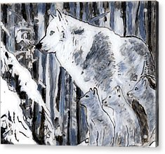 White Wolf Acrylic Print by Phil Strang