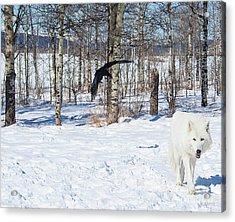 White Wolfdog Acrylic Print