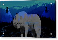 White Wolves Acrylic Print by Evelyn Patrick