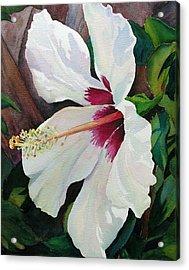 White Wonder Acrylic Print by Judy Mercer