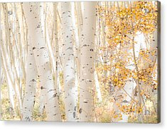 White Woods Acrylic Print by The Forests Edge Photography - Diane Sandoval