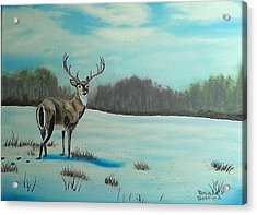 Whitetail Buck Acrylic Print