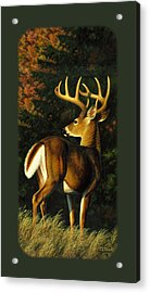 Whitetail Buck Phone Case Acrylic Print by Crista Forest