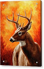 Whitetail Buck Portrait Acrylic Print by Crista Forest