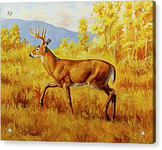 Whitetail Deer In Aspen Woods Acrylic Print by Crista Forest