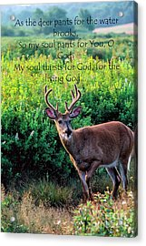 Acrylic Print featuring the photograph Whitetail Deer Panting by Thomas R Fletcher