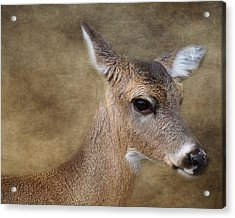 Whitetail Doe Portrait Acrylic Print