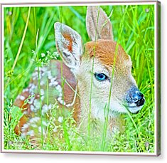 Acrylic Print featuring the photograph Whitetailed Deer Fawn by A Gurmankin