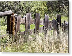 Acrylic Print featuring the photograph Who Ate The Fence by Phyllis Denton