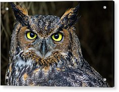 Who, Me? Acrylic Print by Brent L Ander