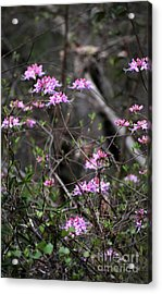 Acrylic Print featuring the photograph Who Put The Wild In Wildflowers by Skip Willits
