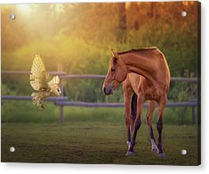 Whoo Are You? Acrylic Print by Debby Herold