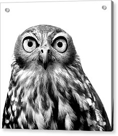 Whoo You Callin A Wise Guy Acrylic Print by Marion Cullen