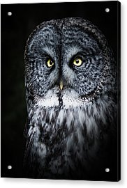 Whooo Are You Looking At? Acrylic Print
