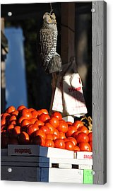 Who's Tomatoes Acrylic Print by Jan Amiss Photography