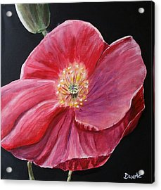 Shirley Poppy Acrylic Print by Carol Duarte