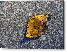 Why We Call It Fall Acrylic Print by Robert Ullmann