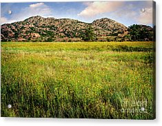 Wichita Mountain Wildflowers Acrylic Print by Tamyra Ayles
