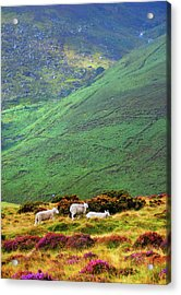 Acrylic Print featuring the photograph Wicklow Pastoral by Jenny Rainbow