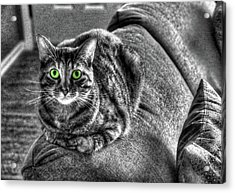 Wide Eyes Acrylic Print