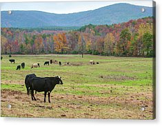 Wide Open Spaces - Autumn Landscape Acrylic Print by Gregory Ballos