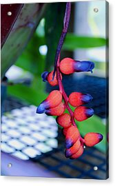 Acrylic Print featuring the photograph Wild About Bromeliads2 by Kate Word