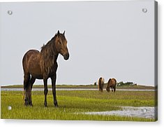 Wild And Free Acrylic Print