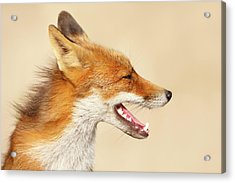 Wild And Free - Fox Portrait Acrylic Print by Roeselien Raimond