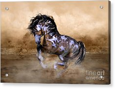 Wild And Free Horse Art Acrylic Print by Shanina Conway