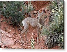 Wild And Pretty - Garden Of The Gods Colorado Springs Acrylic Print by Christine Till