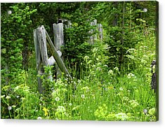 Acrylic Print featuring the photograph Wild And Wildflowers by Marie Leslie