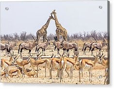 Wild Animals Pyramid Acrylic Print